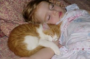 Коты защитят малышей от аллергии