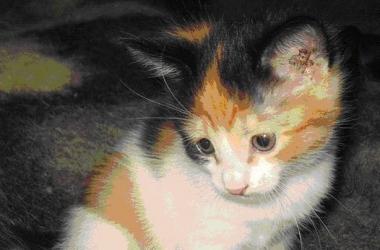 Кошки лечат от гипертонии