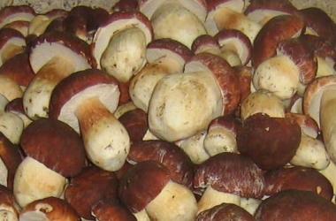 Как похудеть с помощью грибов
