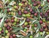 Чем особенно полезны оливки для женщин