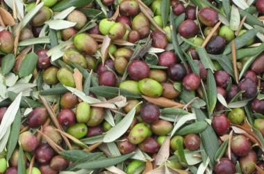 Чем полезны оливки для всех членов семьи