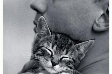Всемирный день кошек 1 марта: 10 удивительных фактов о котах