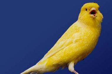 Все болезни лечит пение птиц