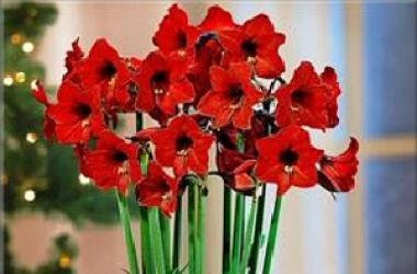 Комнатные растения: какими цветами украсить дом
