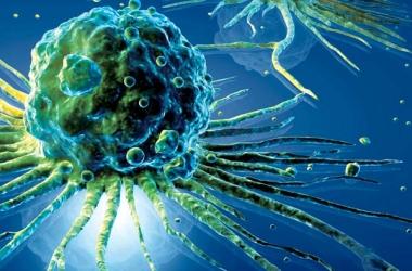 Ученые обнаружили гормоны долголетия