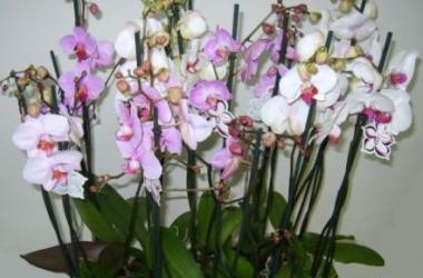 Как ухаживать за орхидеями (фото+видео)