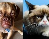 У «Сердитого Кота» появился конкурент - еще более сердитый пес!