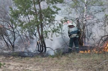 Киев снова накрыло дымом из-за лесного пожара под городом