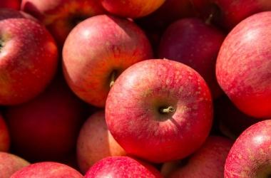 Яблоки: 11 фактов, о которых ты не знала