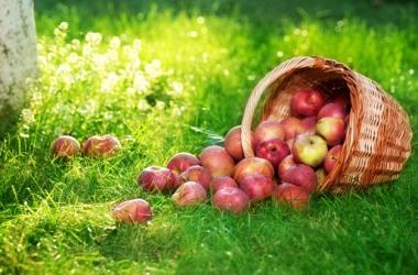 Пастила из яблок: простой рецепт домашней консервации