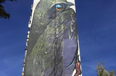 На одном из домов в Киеве поселилась птица невероятных размеров! (фото)