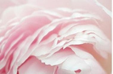 Как носить бледно-розовый: пять модных способов