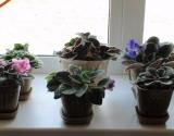 Полезные комнатные растения для городской квартиры