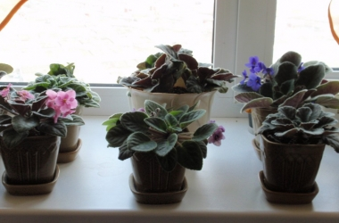 Фэн-шуй и комнатные растения: 8 мифов