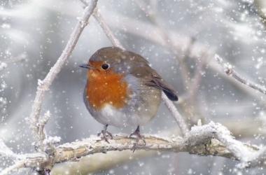 Какой будет зима 2015: прогнозы астрологов и народных синоптиков