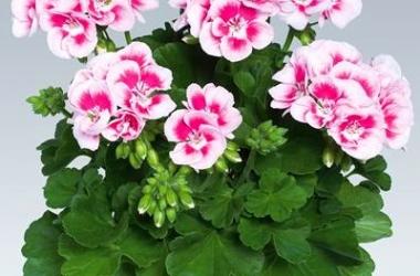 Комнатные растения для спальни: выбираем осторожно!