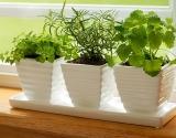 Выбираем свежую зелень: 4 способа не положить в салат нитраты