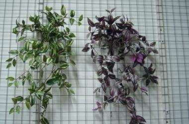 Выбираем растения для ванной комнаты