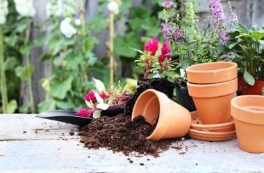 Комнатные растения лечат!