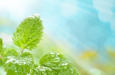 Чистка печени на желчегонных травах: детокс и похудение