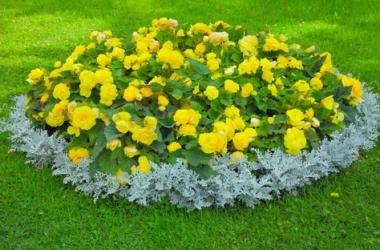 Цветы на даче: делаем желтую клумбу!