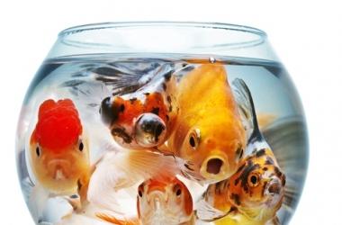 4 причины купить домой аквариум
