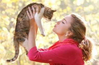 Кошки: правда и мифы