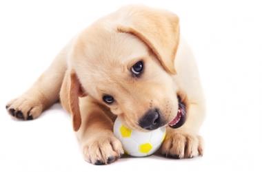 Какие породы собак считаются самыми семейными
