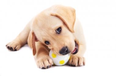 Какую породу собак выбрать? Твой идеальный компаньон! (фото)