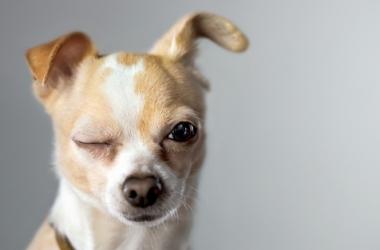 Дрессировка собак: правила и приемы