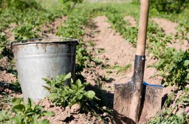 Огород в октябре: что надо сделать?