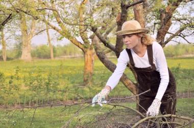 Твой сад: что надо сделать в октябре?
