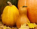 Хэллоуин 2014: идеи для декора тыквы