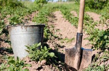 Огород: как хранить овощи в подвале?