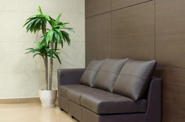 Комнатные растения: уход за пальмой