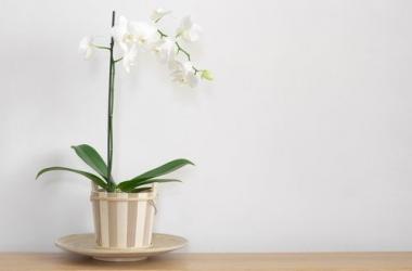 Орхидея фаленопсис: советы по уходу для новичков