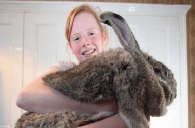 23-килограммовый кролик съедает в неделю почти на 100 долларов (фото)