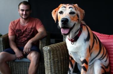 Лабрадор стал тигром ради ребенка (фото)