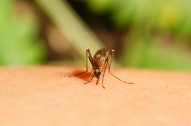 Чем и как лечить укусы комаров