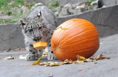 Как звери празднуют Хэллоуин: самые милые фото