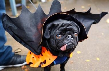 Хэллоуин 2013: домашние любимцы стали вампирами и мумиями (фото)
