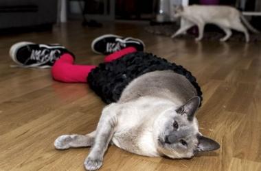 Уморительный хит интернета: коты в колготках Gucci (фото)