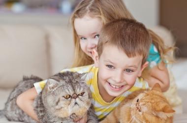 10 уморительных цитат о котах и людях