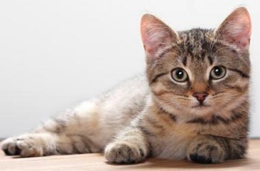 Полезная вкуснятина для котиков: составляем рацион для питомца