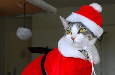 Домашние любимцы в забавных новогодних костюмах (фото)
