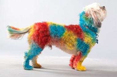 Как изменить домашнего питомца: просто покрась собаку (фото)