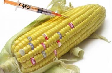 Трансгенные продукты: в чем опасность для здоровья