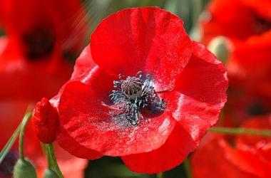 9 Мая: 20 самых мудрых и горьких афоризмов о войне