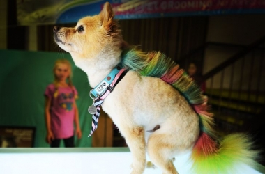 Пес с радужным ирокезом стал хитом выставки (фото)
