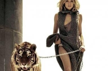 Шерше ля... тигр!